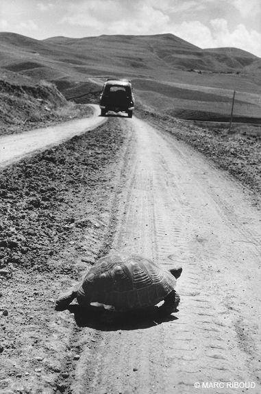 Turkey, 1955