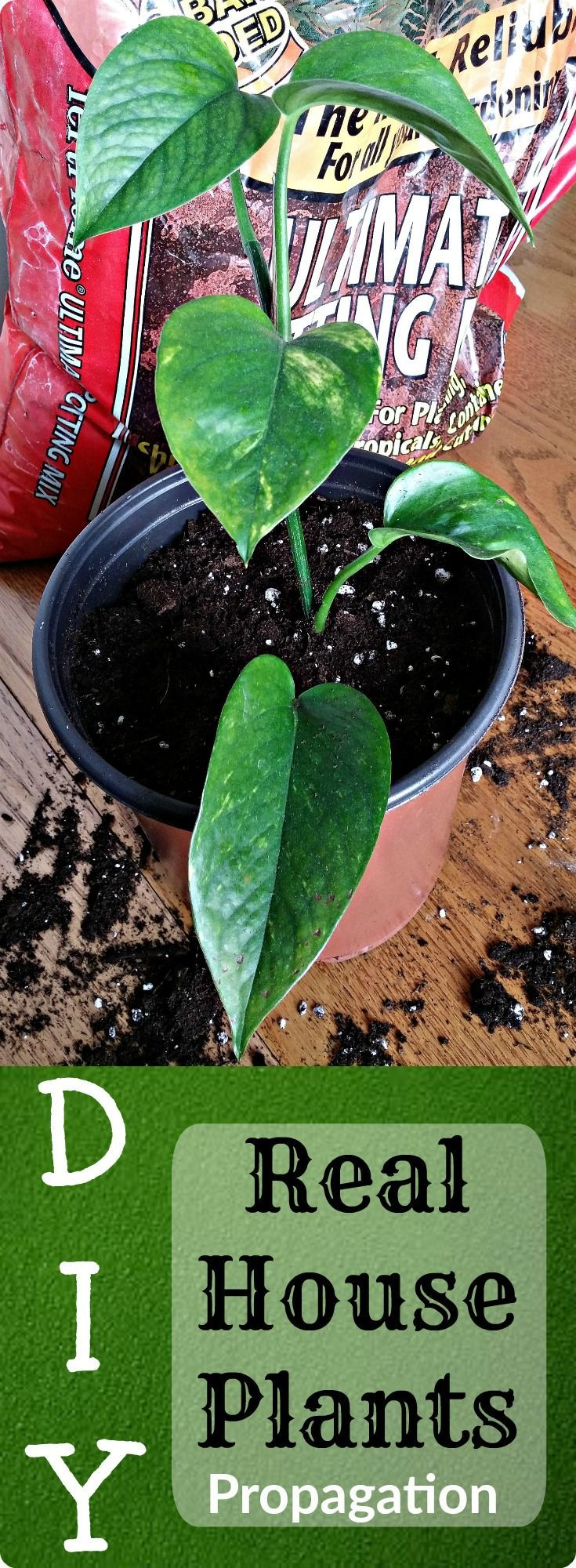 FREE Plants! I use this method for more indoor house plants to decorate my home. DIY natural