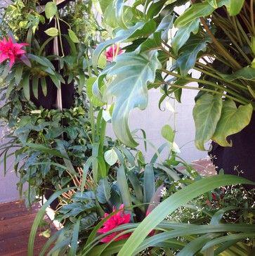 Vertical Garden - Pool Deck - Taringa