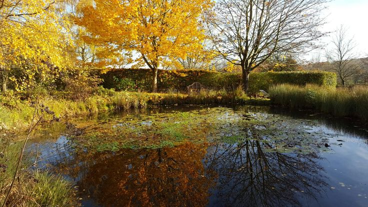 Autumn reflections in our main pond on the flower farm. A peaceful place to sit.
