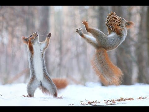 Top Funny Squirrel Videos Compilation 2016 - Cute Animals