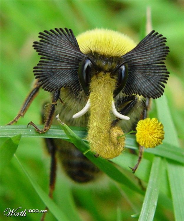 Sorry folks! PHOTO SHOPPED. We've been punked! Elephant Bee not real.