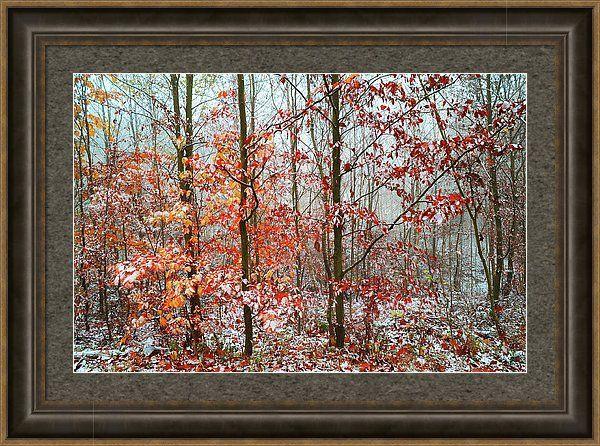 Jenny Rainbow Fine Art Photography Framed Print featuring the photograph Vibrant Touch by Jenny Rainbow