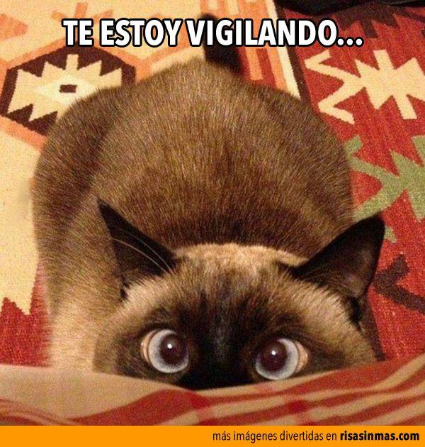 Te estoy vigilando.