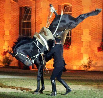 Francezii au o tradiție străveche și admirabilă în privința creșterii cailor. Printr-un program intensiv de reproducție, a luat naștere una dintre cele mai bune rase de cai de sport actuale, și anume Calul de Șa Francez, sau Selle Français-ul. www.horseland.ro