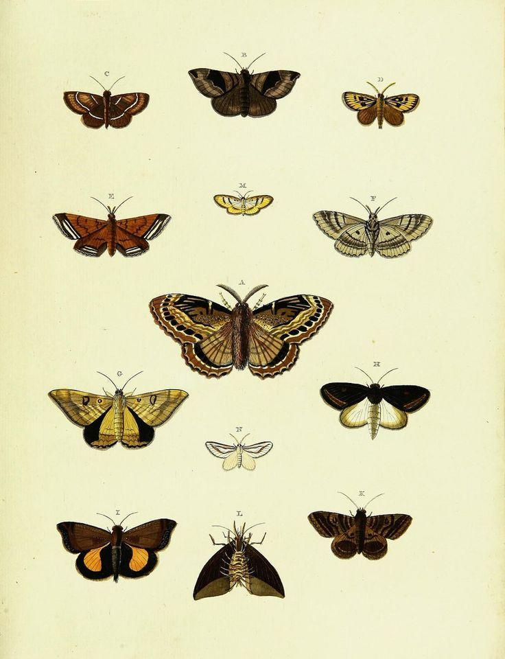 De uitlandsche kapellen voorkomende in de drie waereld-deelen, Asia, Africa en America,. Amsteldam,Chez S. J. Baalde;1779-1782.. biodiversitylibrary.org/page/42111267