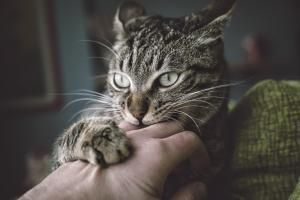 Learn More About Your Cat's Behavior