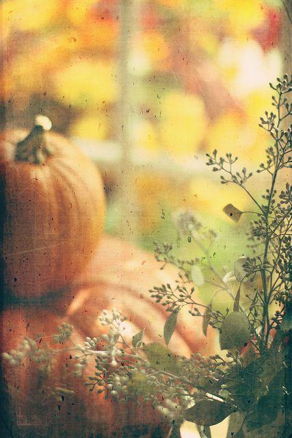 "Kim Klassen ""Fly spattered"" texture www.flickr.com/photos/kimklassen/4661240876/"