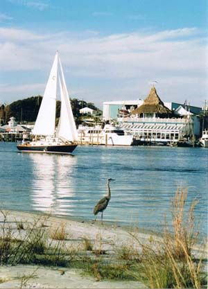 Destin Florida Vacation Information