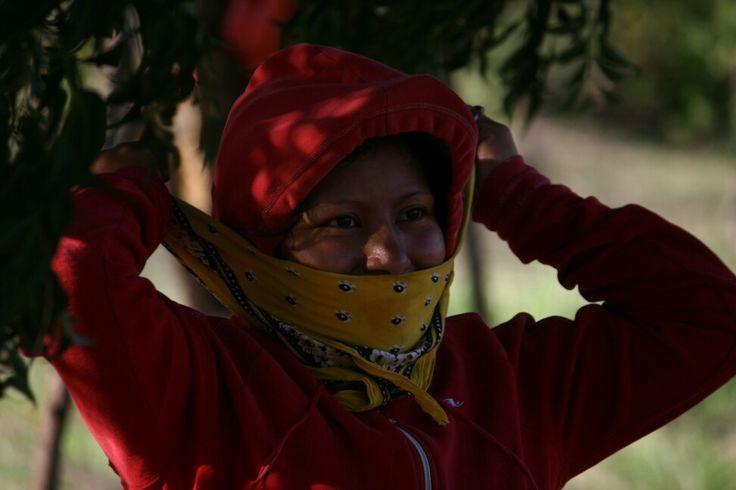 ©hrosem -#ecotoursvoyages - Nicaragua - café plantation / coopérative  la pita / Matagalpa