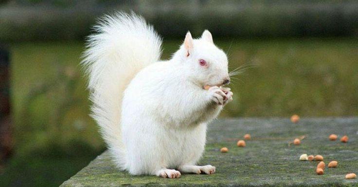Fotografías de 36 animales albinos fascinantes