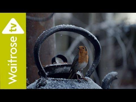Waitrose's Christmas advert follows a little robin's long journey home