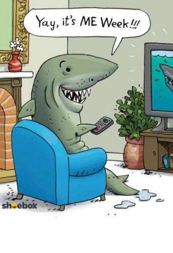 Shark weeeeeeeeek!                                                                                                                                                                                 More