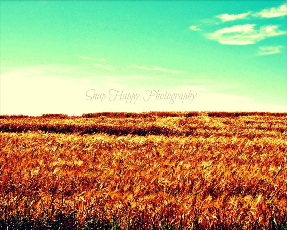 Prairies  8x10 Photo  Alberta Prairies  Landscape by Snaphappy72, $15.00