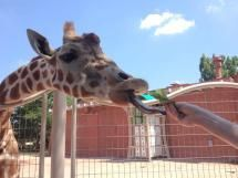 10 Must-See Tourist Attractions in Denver, Colorado: Denver Zoo