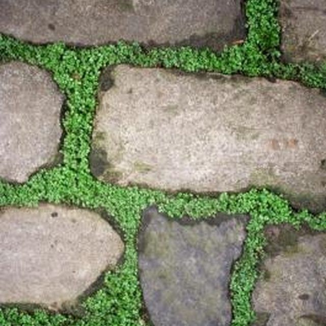 Groundcover planted between flagstone spreads to fill empty spaces.