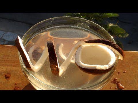 Come aprire una noce di cocco intera perfetta senza romperla sgusciare il guscio le noci - YouTube