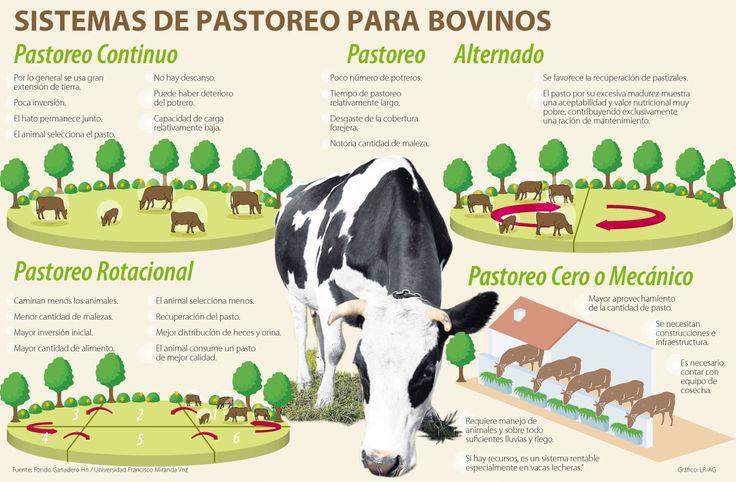 1. Sistemas de pastoreo utilizados en la Ganadería | Zootecnia y Veterinaria es mi Pasíon