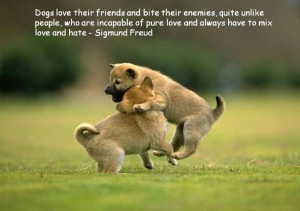 Quotes About Pet Dogs | in love with pooches when I read these heartwarming quotes about dogs ...