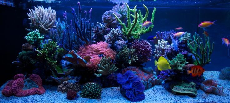 Amazing Reef Aquarium