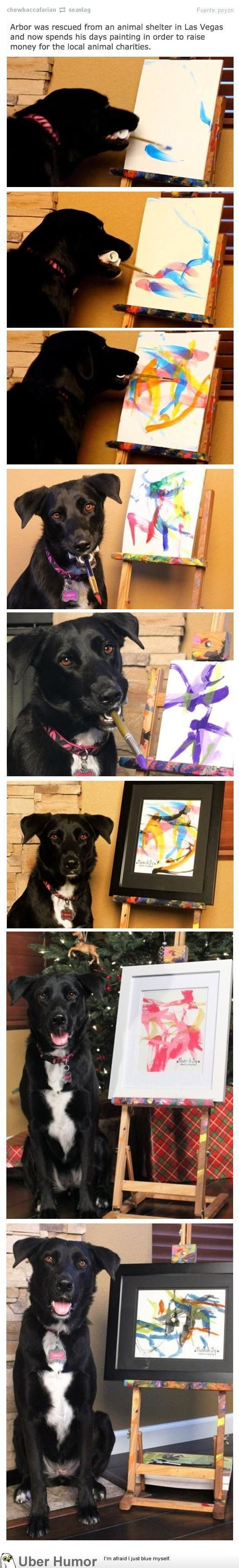 Wow! Arbor the rescue dog paints to raise money for charity!