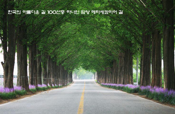한국의 아름다운 길 100선에 선정된 담양 메타세콰이어 길