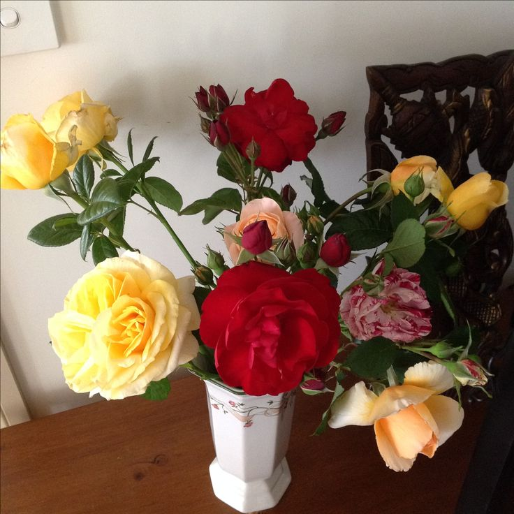 Roses from our garden.