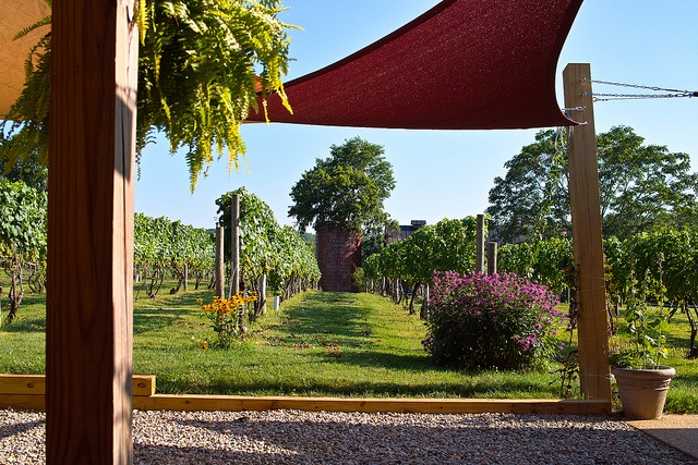 Pearmund Cellars, Broad Run Va.  Nothing like sitting outside enjoying a glass of Meritage...