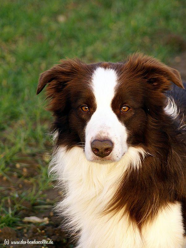our stud dog Nick