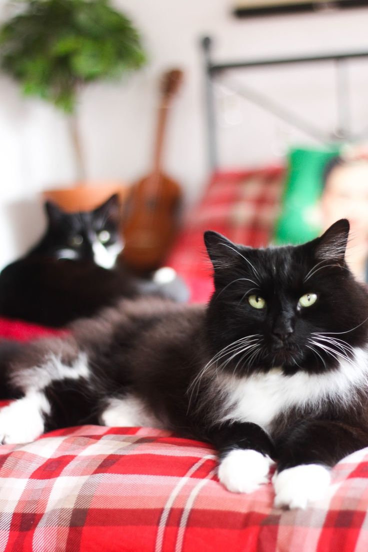 Pet Photography: 7 tricks to take beautiful pictures of your cat Cityscape Bliss // Naughty felines, cat photography