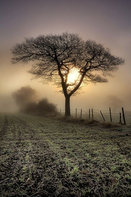 foggy sunrise