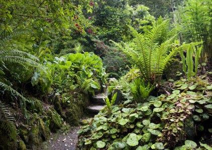 The Fernery at Greenway is a great example of this Victorian feature. Credit: National Trust Images/Andrew Butler.