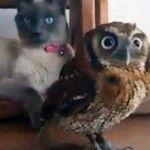 Uggla Och Katt Är Bästa Vänner – Filmen Kommer Att Smälta Ditt Hjärta