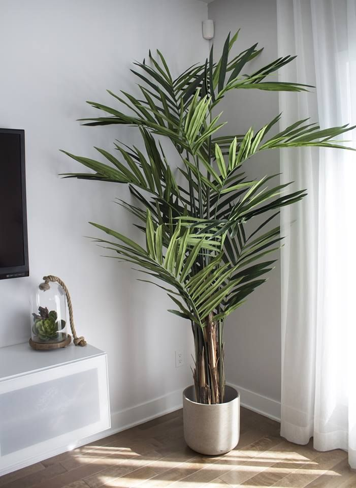 Pin On House Plants