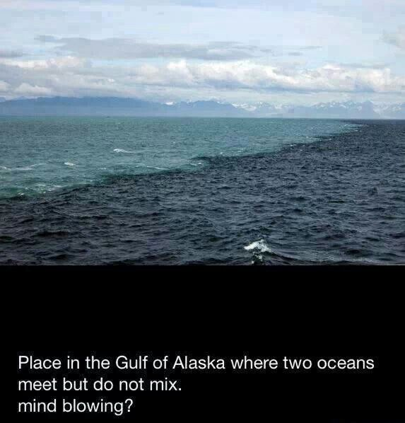 the gulf of alaska two oceans meet but water doesn mix