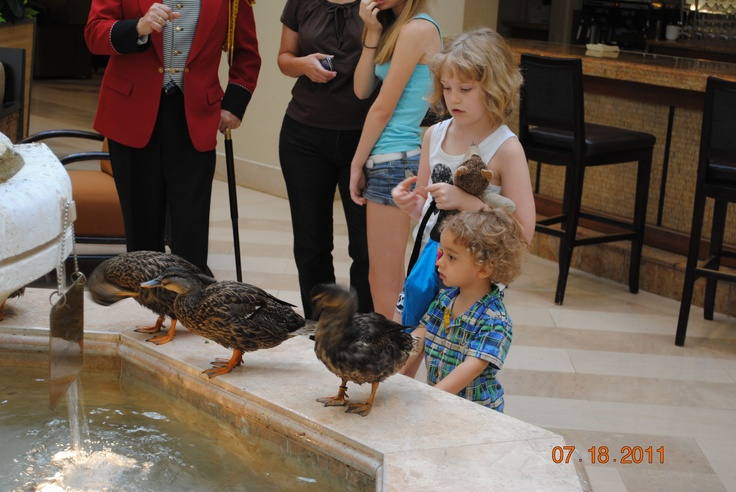 Go to a Peabody Hotel  (Memphis, TN; Orlando, FL; or Little Rock, Arkansas) to see the ducks parade down to the hotel lobby on the red carpet. It's free except you'll probably have to pay to park. 11 am and 5 pm  en.wikipedia.org/wiki/Peabody_Hotel