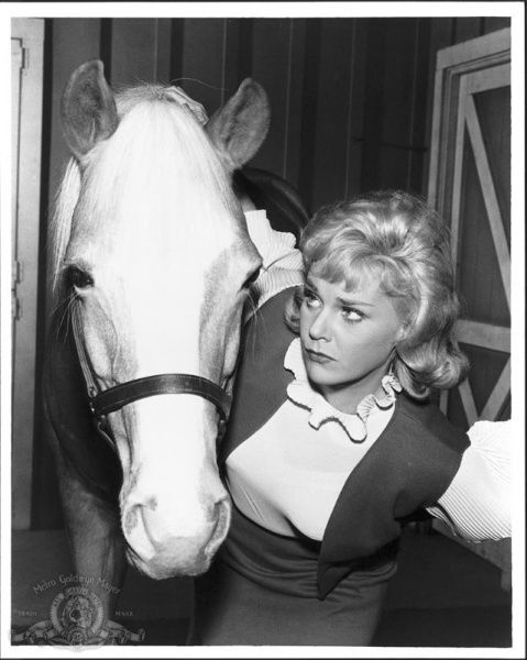 mr ed | Mister Ed.  /Still watch this to this day, love it EL,.