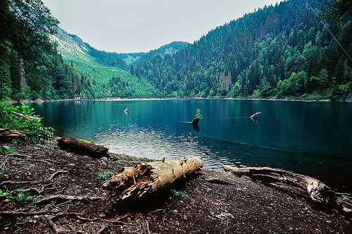 : Favorite Places, Nature, Beautiful Places, Outdoor, Posts, Lakes, Forest, Travel, Photography