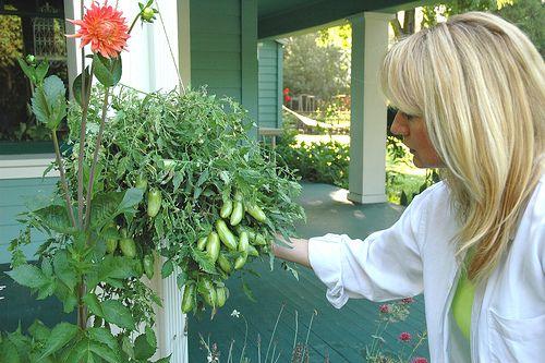 Cucumber hanging basket dec pinterest container for Hanging vegetable garden ideas