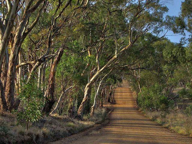 Scobie Road in South Australia by Dave Clarke