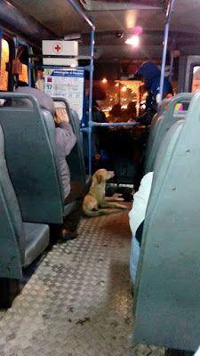 SandRamirez contra el maltrato animal. • www.luchandoporellos.es: POSIBLE FE EN UNA HUMANIDAD RESTAURADA.