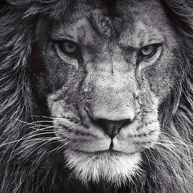 Do not infringe on my dignity, but if you exceed will be waiting for Lion