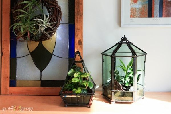 Indoor Plant Care How To Grow Tropical Plants In Geometric Terrariums Garden Therapy In 2020 Indoor Plant Care Geometric Terrarium Plant Care