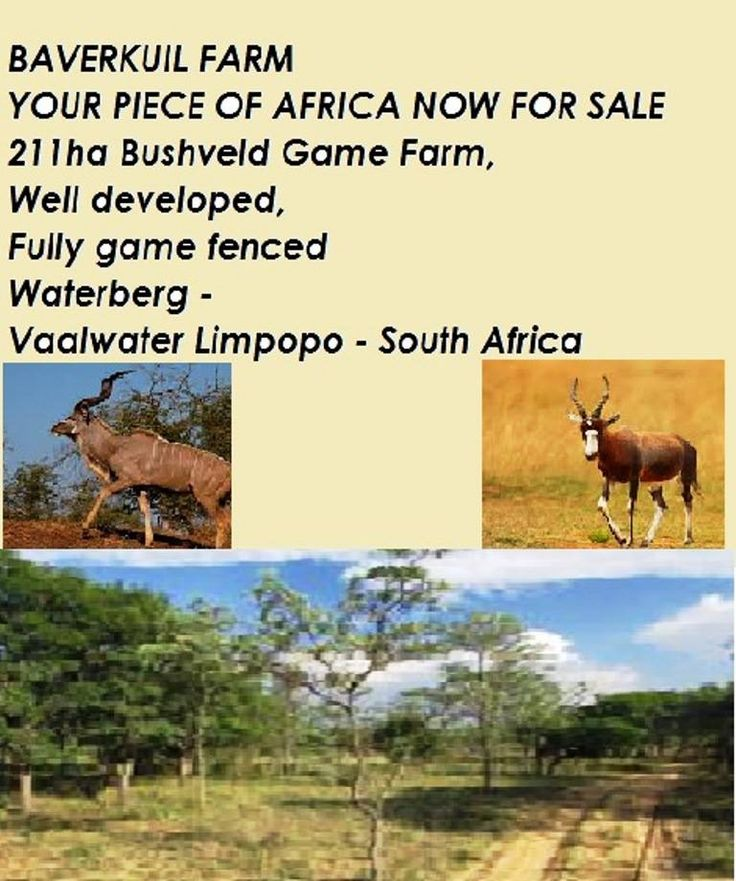 Spectacular Imposing BAVERKUIL FARM 211Ha R 6,499,000.00 Have you always dreamed of owning your own piece of AFRICA Now is your Chance Don't Snooze you will definitely lose This spectacular and imposing farm measures a stunning 211 ha Situated near Vaallwater in the region of Waterberg - Limpopo Situated: On the R33 Main Road - 20 km from Vaalwater and 70 km from Ellisras The impressive main homestead is 800 Sqm and is divided into two sections for two families