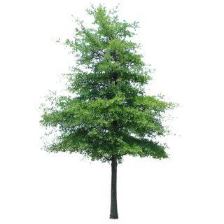 Tree   Immediate Entourage