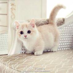 gatos lindos fotos - Pesquisa Google