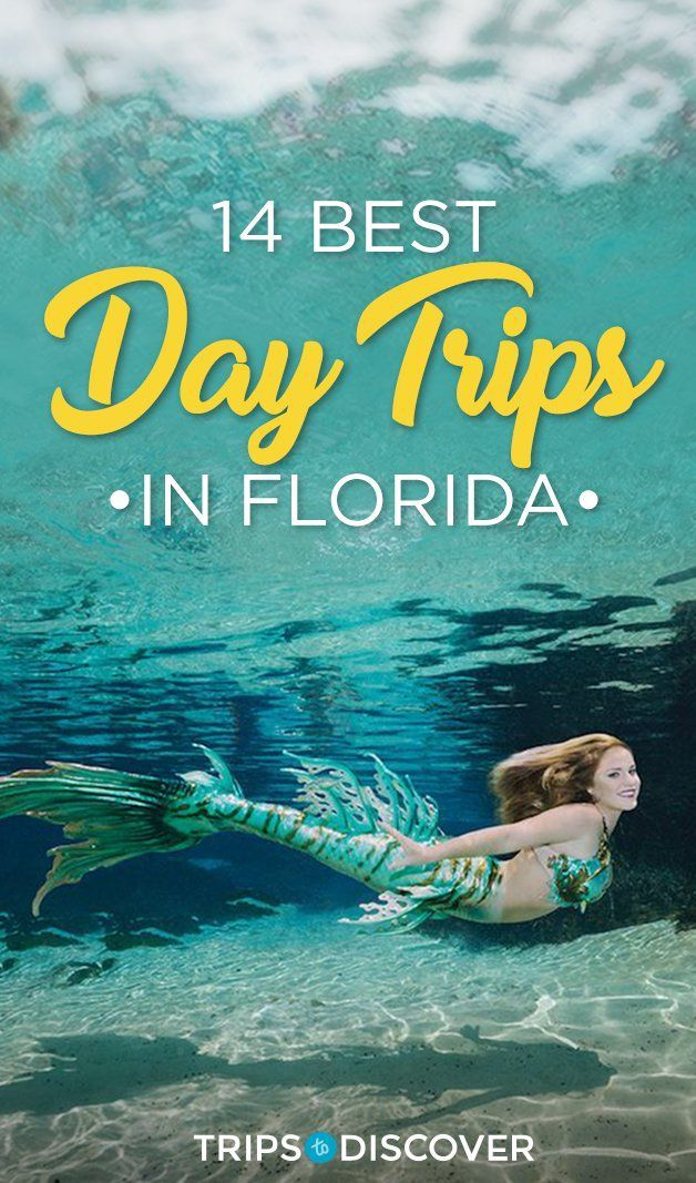 Thinking of taking a day trip to Florida? Here are some great ones! // Article by Trips to Discover
