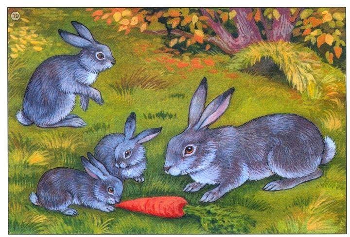 králiky