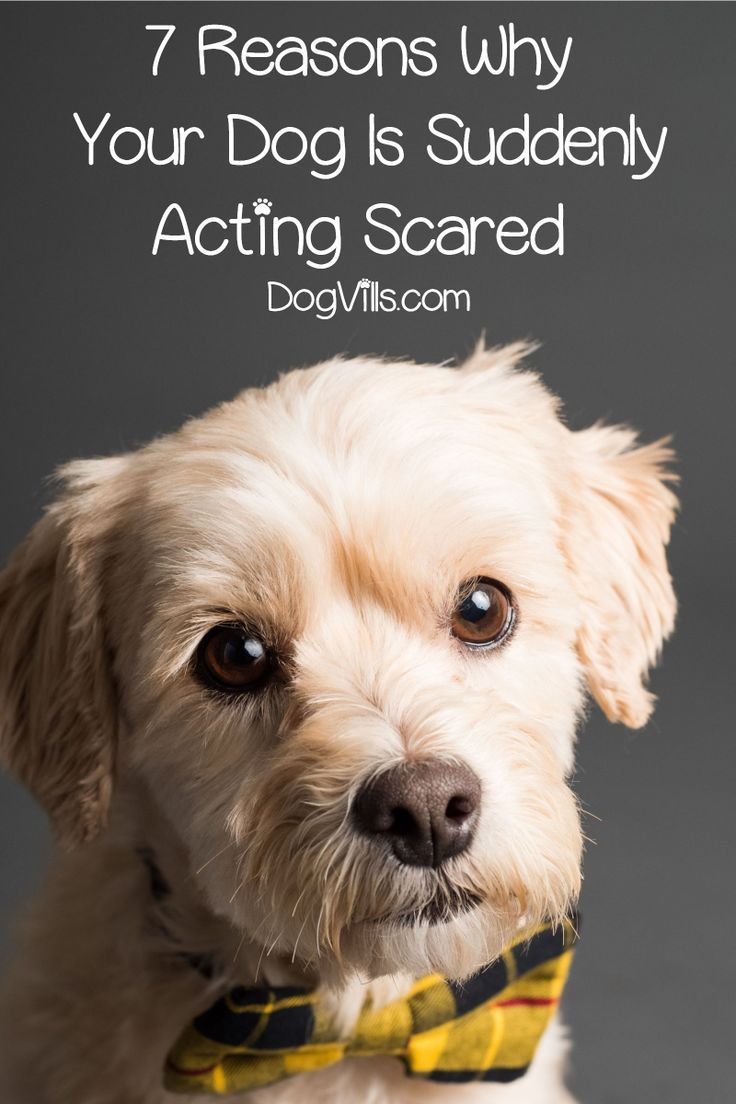 7 Reasons Why Your Dog Is Acting Scared All Of A Sudden Cute Dog