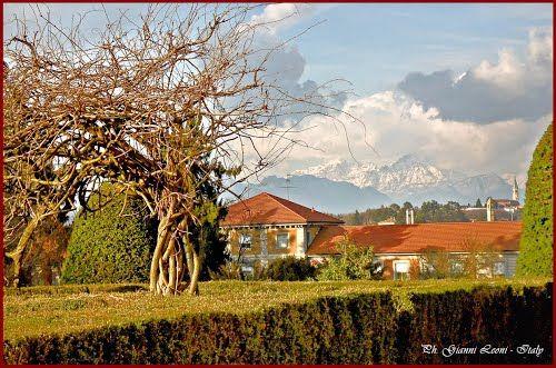 """ITALIA - Carate Brianza (MB). Villa Cusani-Confalonieri (XVII sec. su precedente castello). Albero di glicine e sullo sfondo """"Le Grigne"""".   -    Villa Cusani-Confalonieri (since XVII century, on old castle). Tree of Wisteria and, in background, the mounts """"Le Grigne""""."""